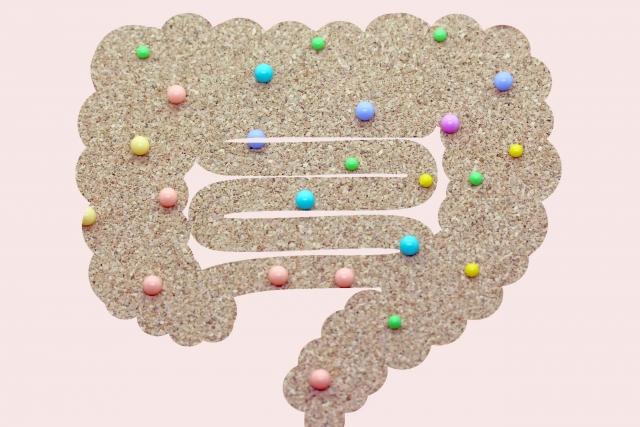 美容と健康のカギを握る腸内菌